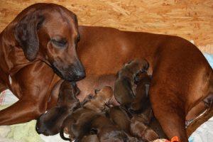 Kafue mit ihren Babys
